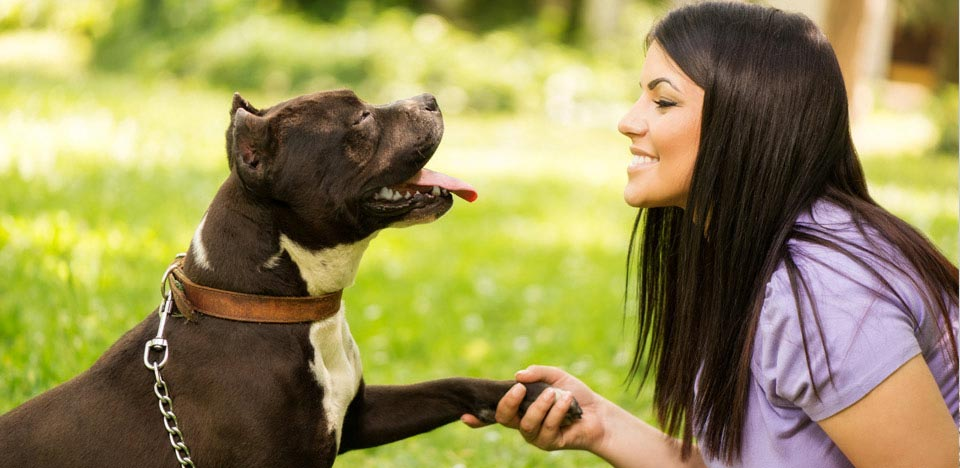 microchips how they work amp why your pet should have one